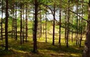 лес марий эл